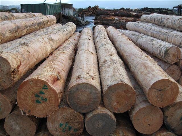 松木原木价格-中国木材网:国产原木价格行情