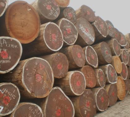 柞木原木价格-中国木材网:东北原木价格行情