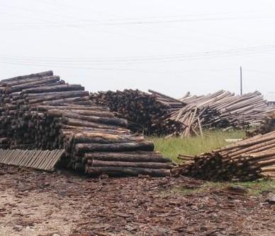 杉木原木--板材原木_产品图片信息_中国木材网!