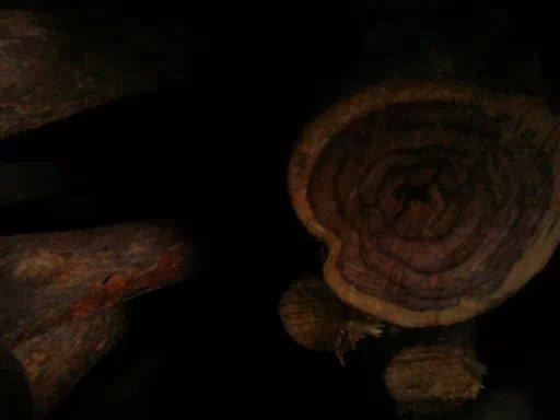 花纹檀树--板材原木_产品图片信息