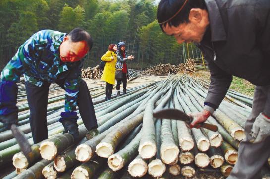 中国木材网|中国木业信息中心